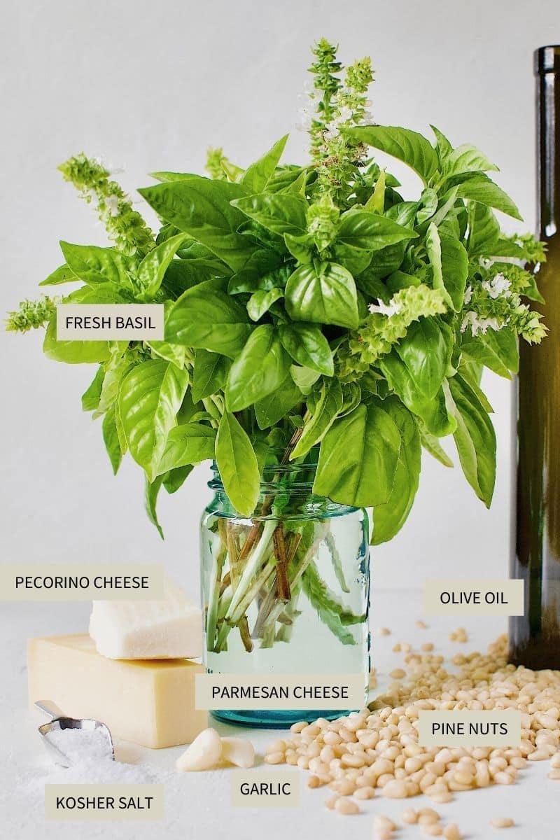 Ingredients needed to make Fresh Basil Pesto Sauce.